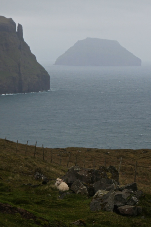 A lamb sleeps on Suðuroy, in view of seacliffs and the island of Lítla Dímun.